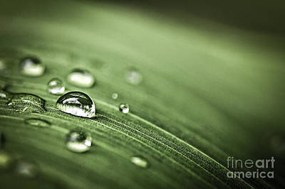 Condensation Photograph - Raindrops On Leaf by Elena Elisseeva