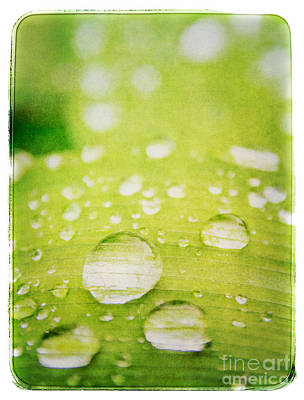 Photograph - Raindrops On Leaf by Lenny Carter