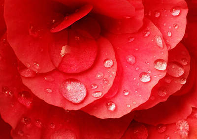 Begonias Photograph - Raindrops On Red Begonia by Jim Hughes