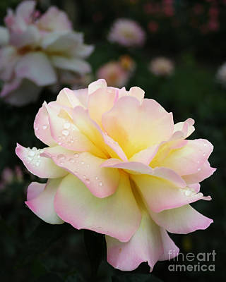 Art Print featuring the photograph Raindrops On Rose Petals by Barbara McMahon