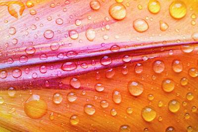 Raindrops On Tulip Petals Art Print by Ashley Cooper