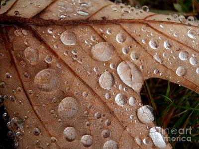 Raindrops  Art Print by Steven Valkenberg