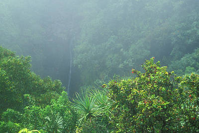 Photograph - Rainforest And Lower Puohokamoa Falls Maui Hawaii by John Burk