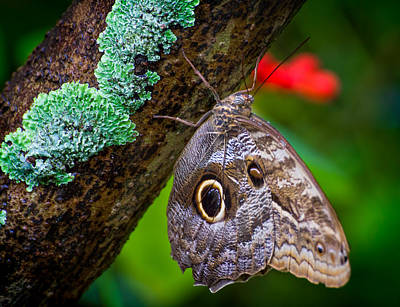 Rainforest Butterfly Print by Mark Andrew Thomas