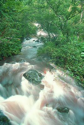 Photograph - Rainforest Cascade Near Hana Maui Hawaii by John Burk