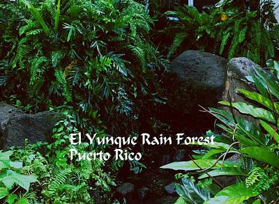 Photograph - Rainforest by Gary Wonning