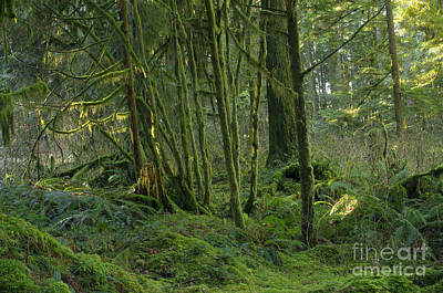 Photograph - Rainforest Green by Sharon Talson