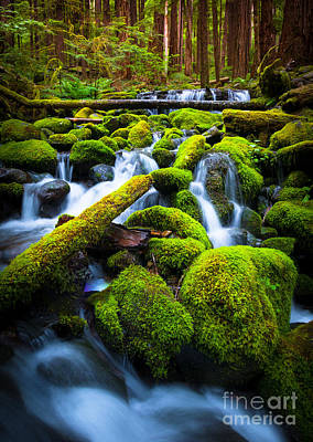 Creek Photograph - Rainforest Magic by Inge Johnsson