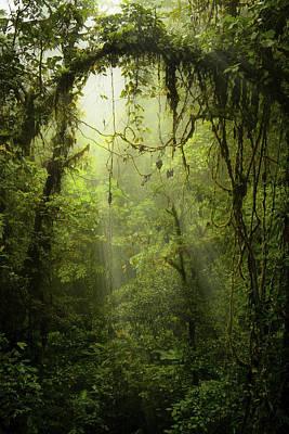 Photograph - Rainforest by Mike Lanzetta