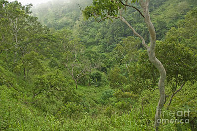 Photograph - Rainforest On Mount Manucoco by Dan Suzio