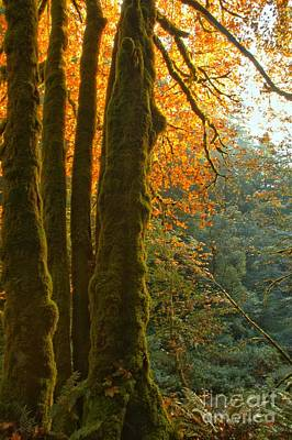 Photograph - Rainforest Orange by Adam Jewell