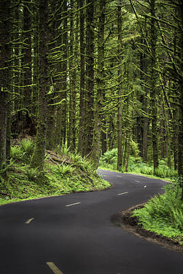 Photograph - Rainforest Road by Sara Hudock