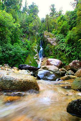 Art Print featuring the photograph Rainforest Stream New Zealand by Amanda Stadther