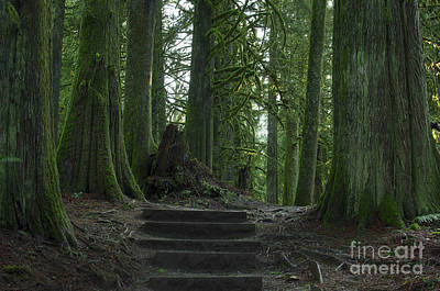 Photograph - Rainforest Trail by Sharon Talson