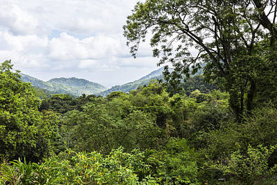 Photograph - Rainforest Trinidad West Indies by Konrad Wothe