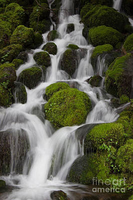Photograph - Rainforest Waterfall by Deanna Proffitt