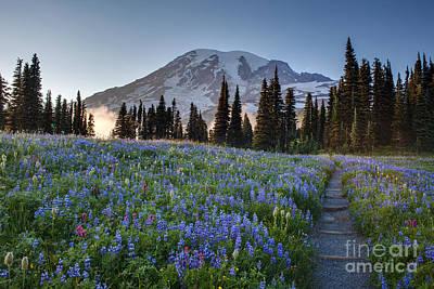 Washington Nationals Photograph - Rainier Evening Lupine Fields by Mike Reid