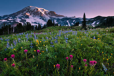 Rainier Flowering Meadow Art Print