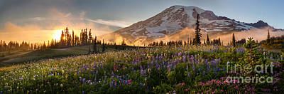 Mountain Royalty-Free and Rights-Managed Images - Rainier Golden Light Sunset Meadows by Mike Reid