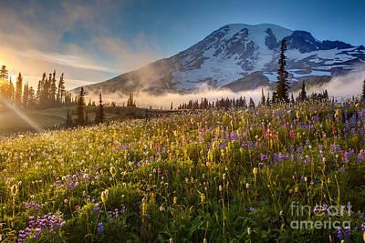 Washington Nationals Photograph - Rainier Golden Sunlit Meadows by Mike Reid