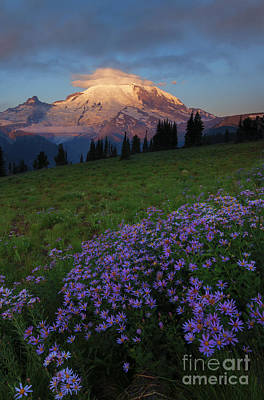Asters Photograph - Rainier Morning Cap by Mike  Dawson