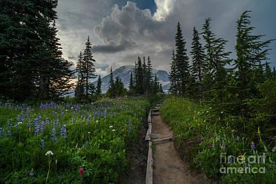 Rainier Trail Through The Meadows Art Print by Mike Reid