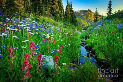 Park Scene Photograph - Rainier Wildflower Creek by Inge Johnsson