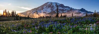 Washington Nationals Photograph - Rainier Wildflower Meadows Pano by Mike Reid