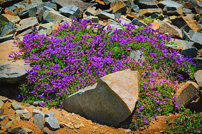 Photograph - Rainier Wildflowers by Greg Norrell