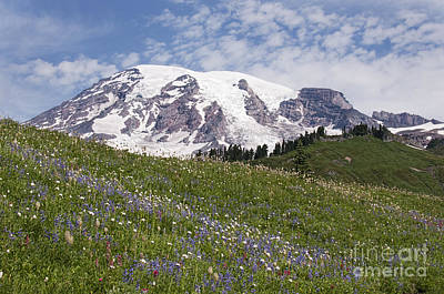 Rainier's Wildflowers Art Print