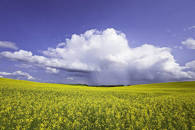 Rainstorm Over Canola Field Crop Art Print by Ken Gillespie