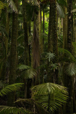 Photograph - Rainy Day In The Rain Forest by Inge Riis McDonald
