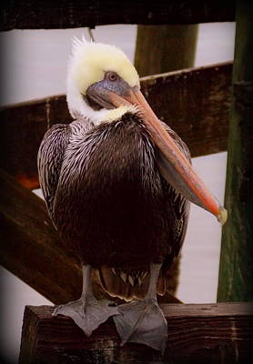 Photograph - Rainy Day Pelican by Sheri McLeroy