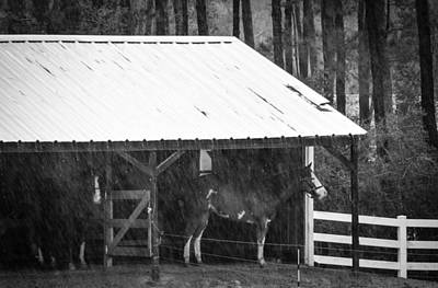 Photograph - Rainy Day by Shey Stitt