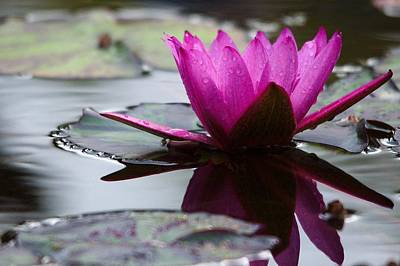 Kitchen Mark Rogan - Rainy Day Water Lily Reflections 6 by Roy Williams