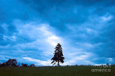 Horror Photograph - Rainy Landscape With Single Tree by Michal Bednarek