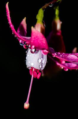 Photograph - Rainy Pink Fuchsia by Amy Porter