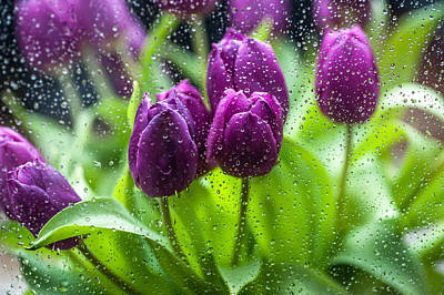 Photograph - Rainy Tulips 1 by Jenny Rainbow