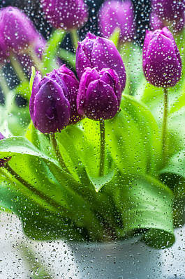 Photograph - Rainy Tulips 2 by Jenny Rainbow