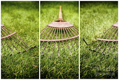 Photograph - Rake by Jim Orr