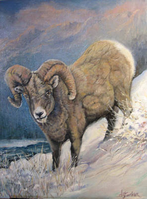 Art Print featuring the painting Ram In The Snow by Donna Tucker