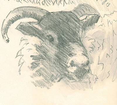 Drawing - Ram With Horns Sketch by Mike Jory