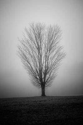 Photograph - Ramblin' Tree by Robert Clifford