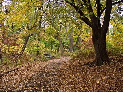 Photograph - Rambling Through Autumn by Cornelis Verwaal