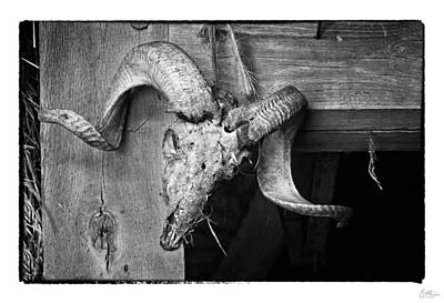 Bone Photograph - Ram's Head - Art Unexpected by Tom Mc Nemar