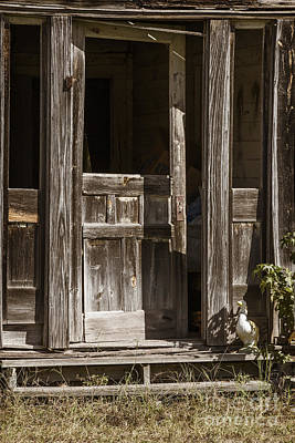 Photograph - Ranch Cabin Old Door In Antique Color 3007.02 by M K Miller