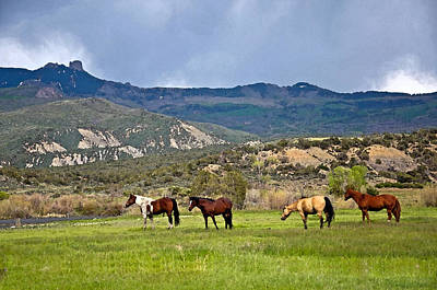 Photograph - Ranch Horses  by Eric Rundle