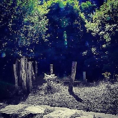 Woodland Photograph - #random#woodland #sticks#grey #green by Vicky Combs