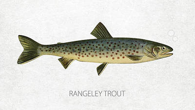 Fish Species Digital Art - Rangeley Trout by Aged Pixel
