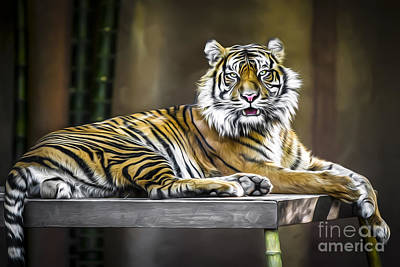 Photograph - Ranu The Sumatran Tiger by Shannon Rogers